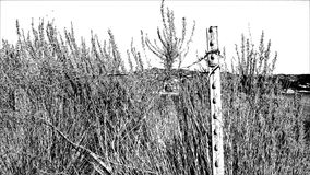 Hauts arbustes de désert de Contast banque de vidéos