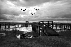 Hauts oiseaux noirs et blancs de contast volant au-dessus du lac avec en bois Images libres de droits