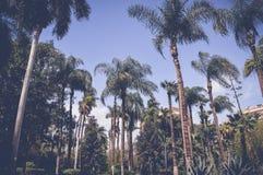 Hauts paumes et arbres à l'intérieur de jardin de poissons Photo stock