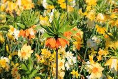Hav av blomningar - botanisk trädgård, Göteborg, Sverige Arkivfoto