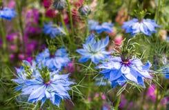 Hav av blomningar - Sachsen, Tyskland Arkivfoto