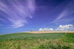 Hav av gräs 2 arkivbilder