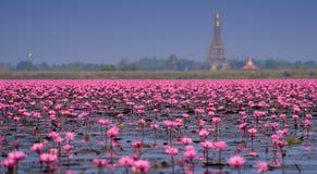 Hav av rosa lotusblomma, Nong Han, Udon Thani, Thailand (som är osedd i thailändskt Royaltyfri Foto