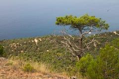 Hav Black Sea, turist, turism, Krim Arkivfoton
