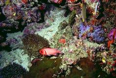 hav för 10 överraska värld för andaman koraller Royaltyfria Bilder