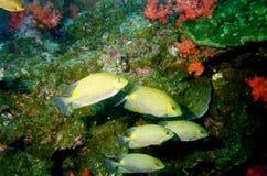 hav för 25 överraska värld för andaman koraller royaltyfri foto