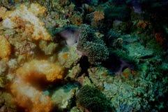 hav för 3 överraska värld för andaman koraller Arkivfoto