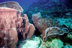 hav för 39 överraska värld för andaman koraller Royaltyfri Foto