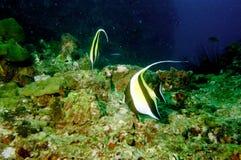 hav för 46 överraska värld för andaman koraller Royaltyfri Fotografi