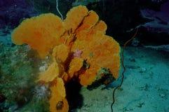 hav för 8 överraska värld för andaman koraller Royaltyfria Foton