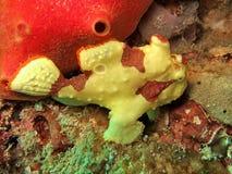 hav för koralllivstidsrev Arkivfoton