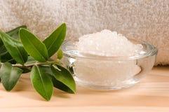 hav för ny olivgrön för filial salt Royaltyfri Fotografi