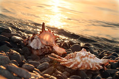 hav för strålcockleshellgryning Fotografering för Bildbyråer