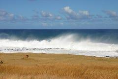 Hav, gräs och moln Fotografering för Bildbyråer