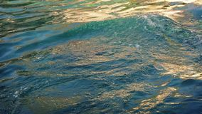 Hav Lion Basking In The Sea stock video
