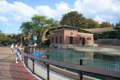 Hav Lion Pool på Lincoln Park Zoo Chicago, Illinois arkivbilder