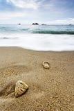 Hav med vågen och skal på sand Arkivbild