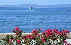 Hav och blommor Fotografering för Bildbyråer