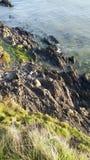 Hav och gräs Arkivbilder