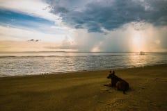 Hav och hund för stormmoln Royaltyfria Foton