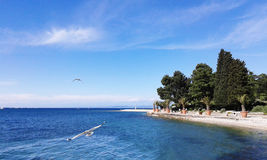 Hav och seagulls royaltyfri bild