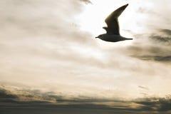 Hav och seagulls för Istanbul solnedgångtid Royaltyfri Fotografi