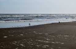 Hav, sand och seagulls Arkivbild
