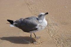 hav Seagulls på kanten av stranden den många solen Arkivbild