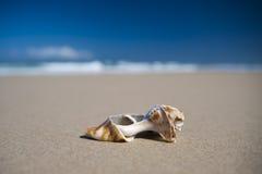 Hav Shell - Cabarita strand Arkivfoto