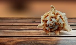 Hav Shell på brun trätabellbakgrund royaltyfri foto