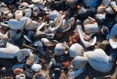 Hav Shell på Sandy Shore Arkivbilder