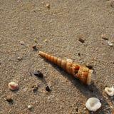 Hav Shell vid seashoren Royaltyfri Fotografi
