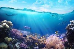 Hav som är undervattens- med marin- djur fotografering för bildbyråer