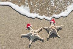 Hav-stjärnor kopplar ihop i santa hattar på sanden Arkivbild