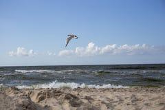 Hav, strand och fågeln Royaltyfri Foto