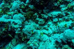 Hav under vattennaturen, med reafkorall och fiskar Havsflora och faunor Royaltyfri Bild