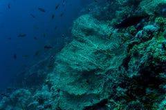 Hav under vattennaturen, med reafkorall och fiskar Havsflora och faunor Arkivbilder