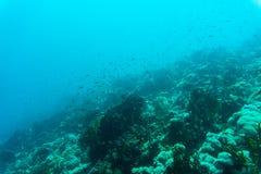 Hav under vattennaturen, med reafkorall och fiskar Havsflora och faunor Royaltyfri Fotografi