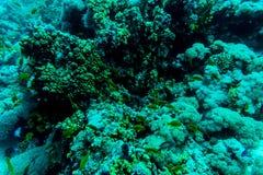 Hav under vattennaturen, med reafkorall och fiskar Havsflora och faunor Fotografering för Bildbyråer