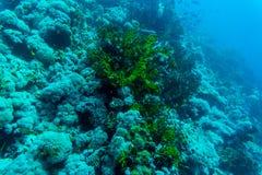 Hav under vattennaturen, med reafkorall och fiskar Havsflora och faunor Arkivbild