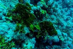 Hav under vattennaturen, med reafkorall och fiskar Havsflora och faunor Royaltyfria Bilder