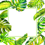Havaí tropical deixa o quadro da palmeira em um estilo da aquarela isolado ilustração do vetor