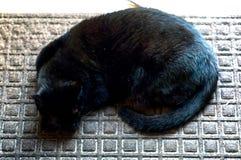 Havana Brown Cat Sleeping fotografía de archivo