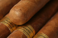 Havana Cigars Texture. Havana cigars macro textured background Royalty Free Stock Photo