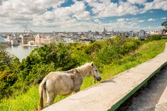 Havana, Cuba. Panoramic view Royalty Free Stock Photo
