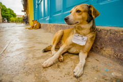 HAVANA, KUBA - 2. DEZEMBER 2013: Straßenhunde Stockfotos