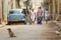 Havana-Straße Lizenzfreies Stockfoto