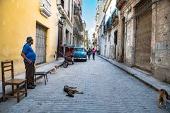 Havana, Street life with dogs, classic car, cycle taxi in small street with view to Capitolio, Cuba. View in small street with antique car of Havana with royalty free stock photo