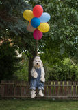 Havanese dog flying with colorful balloons Royalty Free Stock Photo
