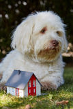 Havanese dog symbolically watching a figurine house stock image